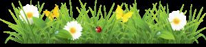 grass_png4920